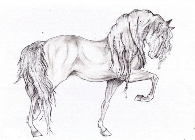 Muestra cómo dibujar un caballo. Cómo dibujar un caballo con lápiz ...