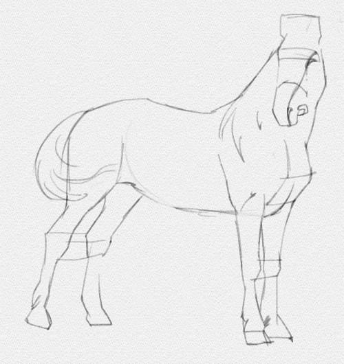 Ako Nakreslit Koni V Stadiu Pre Zaciatocnikov Papuľa Koni